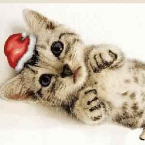 """""""猫咪陪你""""圣诞节 IS COMING"""